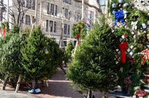 クリスマスツリー NY露店