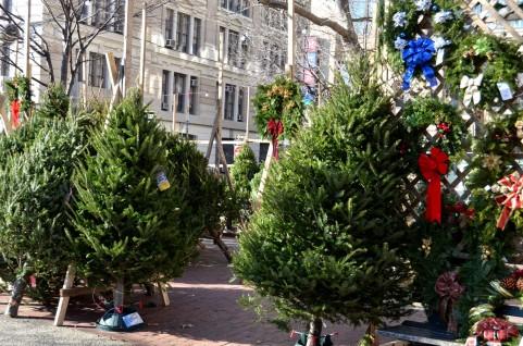 クリスマスツリーは断然 生木で★モミの木信者になっちゃいましょう!