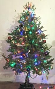 クリスマスツリー 生木