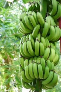 バナナ 保存方法
