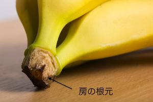 バナナ保存法 房の根元